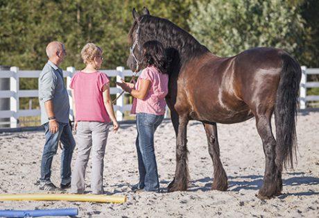 Wir coachen dich - Pferdegestütztes Coaching für Unternehmer