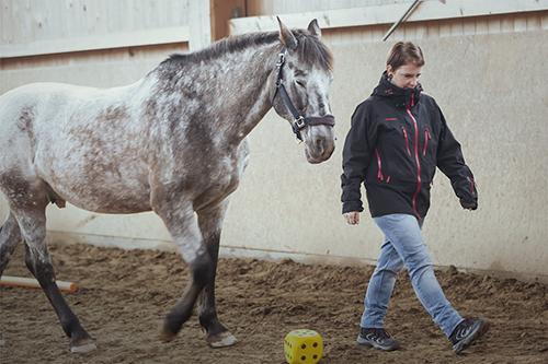 Wir coachen dich pferdegestütztes Coaching mit Pferden Antje Müller