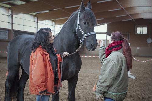 Wir coachen dich pferdegestütztes Coaching mit Pferden Antje Müller Pferdecoach