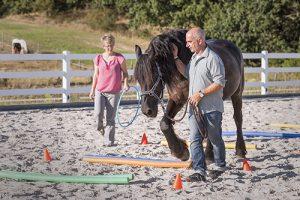 wir_coachen_dich_pferdegestütztes_coaching_mit_pferden_antje_müller_Tageskurs_Führungskräfte-Mitarbeiter-Team