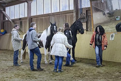 wir_coachen_dich_pferdegestuetztes_coaching_mit_pferden_antje_mueller_modershausen_Therapiezentrum_von_Berg