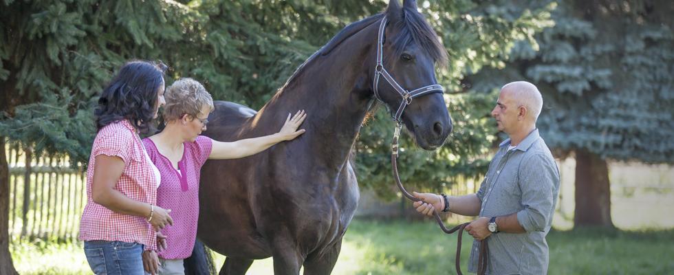 wir_coachen_dich_pferdegestütztes_coaching_mit_pferden_antje_müller_unternhehmer_unternehmerinnen_führungskräfte_sachsen_radebeul