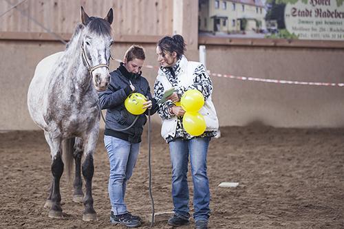 wir_coachen_dich_pferdegestütztes_coaching_mit_pferden_antje_müller_intensivkurs_radebeul