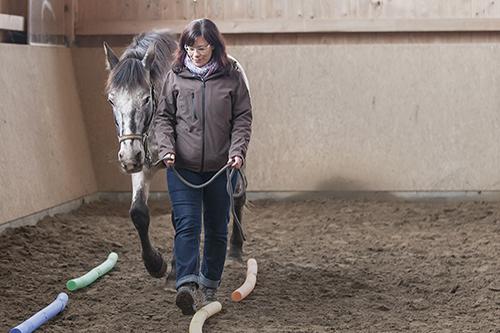 wir_coachen_dich_pferdegestütztes_coaching_mit_pferden_antje_mueller_intensivkurs_radebeul