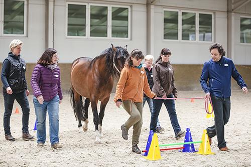 Pferdegestützte Coachings mit den Coaches Antje Müller und Markus Böker