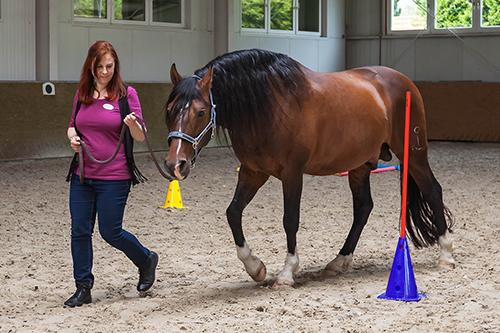 Pferdegestütztes Coaching, Führungskräftecoaching, Unternehmer, Führung, Wirkung, Kommunikation, BVMW, Dresden