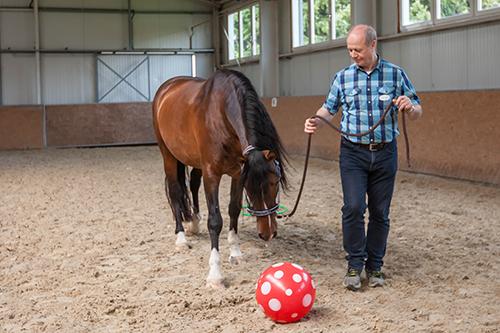 Pferdegestütztes Coaching, Führungskräfte, Wirkung, Führung, Mitarbeiter, Dresden, BVMW, wir coachen dich, Antje Müller, Pferde