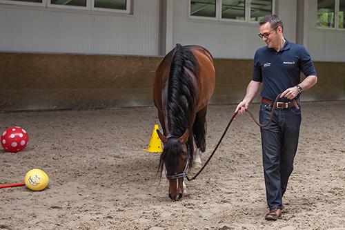 Pferdegestütztes Coaching, Führungskräfte, Unternehmer, Führung, Wirkung, Kommunikation, BVMW, wircoachendich, Dresden