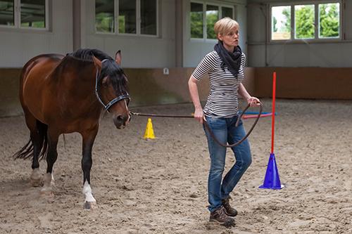 Pferdegstütztes Coaching, Führung, Führungskräfte, Wirkung, Dresden, BVMW, Wir coachen dich
