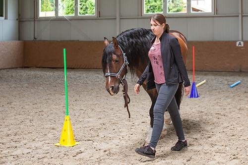 Pferdegestützte Coachings, Führungskräfte, Unternehmer, Mitarbeitercoaching, Team, BVMW, Dresden, wircoachendich