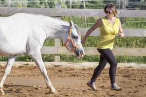 WCD_Pferdegestuetztes_Coaching_mit_Pferden_23w