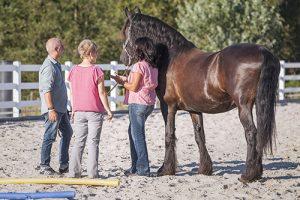 wir_coachen_dich_pferdegestütztes_coaching_mit_pferden_antje_müller_unternehmer-unternehmerinnen_führungskräfte_sachsen_radebeul