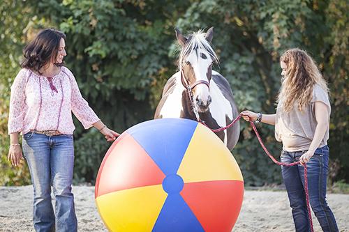 wir_coachen_dich_pferdegestütztes_coaching_mit_pferden_antje_müller_Eppendorf_Mitarbeiter_Mitarbeitercoaching