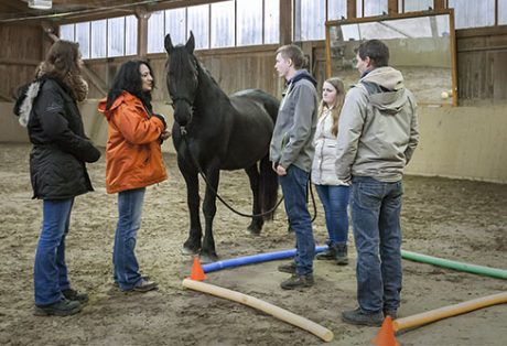WirCoachenDich.de Pferdegestütztes Coaching mit Pferden Antje Müller