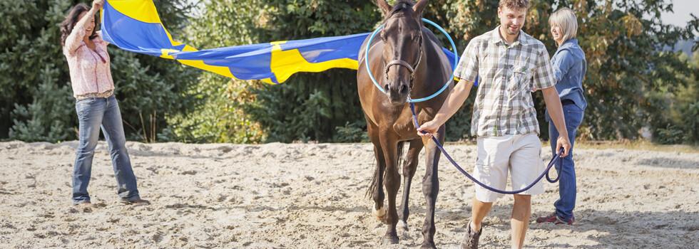 wir_coachen_dich_pferdegestütztes_coaching_mit_pferden_antje_müller_Eppendorf_einzelcoaching_Mitarbeiter_Mitarbeitercoaching_einzelcoaching_Sachsen