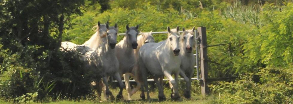 wir_coachen_dich_pferdegestütztes_coaching_mit_pferden_antje_müller_Eppendorf_Führungkräftecoaching_frankreich_exklusivcoaching