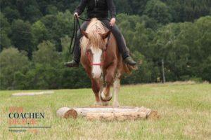 Kommunikation und Beziehungstraining, Vertrauen, Balance, Mut, Muskeltraining, Selbstvertrauen, Selbstbewusstsein, Körpersprache, Location, Erzgebirge, Nature Horse Trail