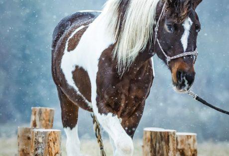 NATURE HORSE TRAIL im Erzgebirge